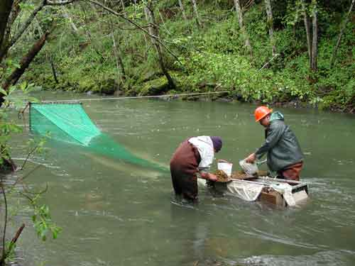 Checking-Outmigrant-Fish-Trap-2004